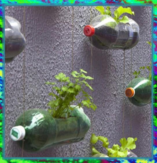 огурцы на стене в бутылках фото