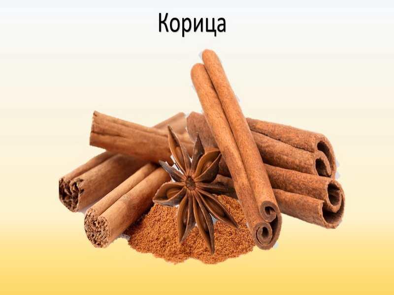 korica