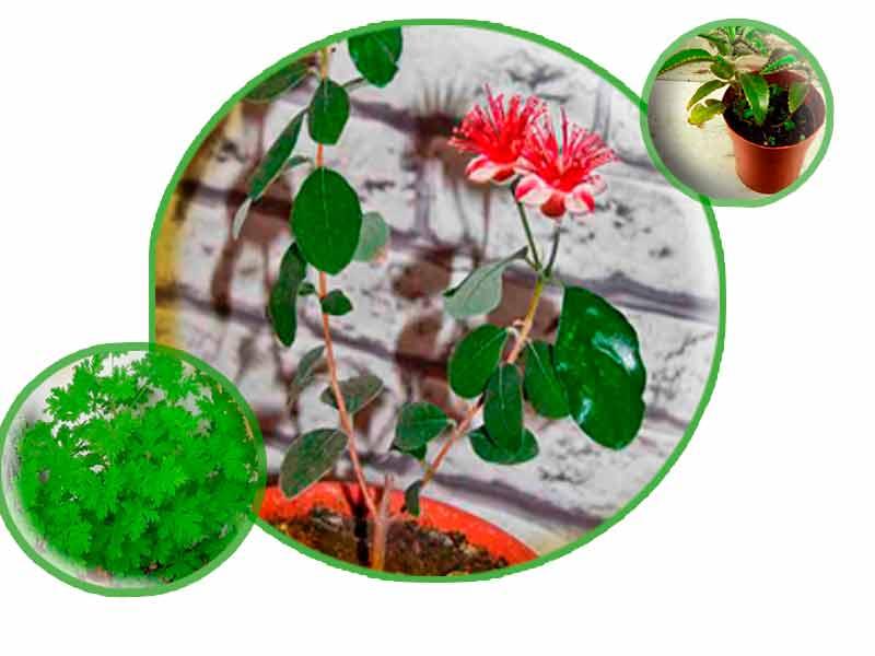 Комнатные растения. Коллаж